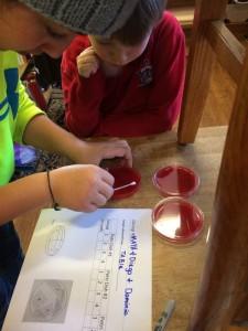 petri dish 3 elementary class